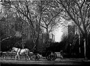 Central Park Drawings - Hansom Cab by Jerry Winick