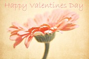 Oregon Flowers Posters - Happy Valentines Day Poster by Cathie Tyler