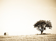 Bale Metal Prints - Hay Bale and Tree in Monochrome Metal Print by Gordon Wood