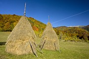 Romania Photos - Hay Stooks In The Zsil Valley, Romania by Bob Gibbons