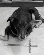Cross Breed Photos - He Gets It in Black and White by Deborah  Montana