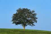 Healthy Tree Print by John Greim