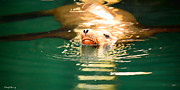 California Sea Lions Photos - Hello by Cheryl Young