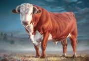 Cow Paintings - Hereford bull by Hans Droog
