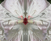 Blend Photos - Hibiscus Mystery by Michele Caporaso
