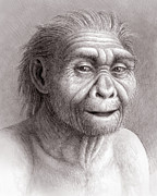 Evolutionary Biology Prints - Homo Georgicus Print by Mauricio Anton