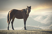 Brown Horse Posters - Horse In Wild Poster by Arman Zhenikeyev - professional photographer from Kazakhstan