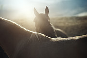 Kazakhstan Photos - Horses by Arman Zhenikeyev - professional photographer from Kazakhstan