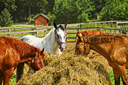 Feeding Photo Metal Prints - Horses at the ranch Metal Print by Elena Elisseeva