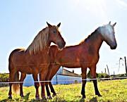Horses Print by Jenny Senra Pampin