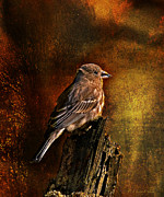 Layered Prints - House Finch With Sunflower Seed Print by J Larry Walker