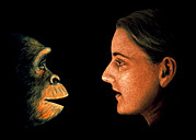 Chimpanzee Glass - Human Evolution by David Gifford