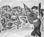 Feeding Birds Drawings Prints - Hummingbird Print by Shelley Bain