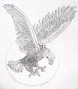 Drawing Of Eagle Drawings - Hungry one retake by Nancy Rucker