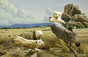 Animales Framed Prints - Hunting Framed Print by Vicente Alcazar
