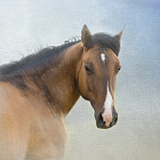 Quarterhorse Posters - I Walk in Beauty Poster by Betty LaRue