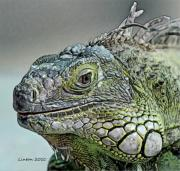 Colored Charcoal Digital Art Framed Prints - Iguana Verde Framed Print by Larry Linton