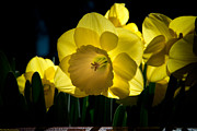The Flower Photographer - Illumination by Glenn Franco Simmons