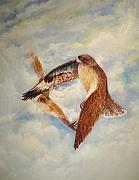 Hawks Mixed Media - In Flight by David Kelly
