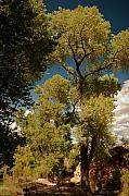 R J Ruppenthal Art - INDIAN GARDEN - Grand Canyon Arizona by R J Ruppenthal