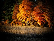 Indiana Autumn Print by Michael L Kimble