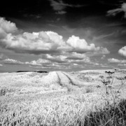Landscapes Prints - Infrared landscape in Norway Print by Heiko Koehrer-Wagner