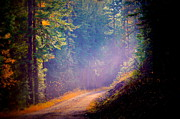 Sandpoint Prints - Into The Light Print by Donna Duckworth