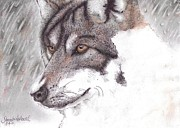 Realistic Wolf Framed Prints - Invisible Framed Print by Samantha Howell