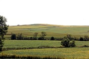 Corns Prints - Iowa farmland Print by Yumi Johnson