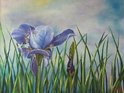 Dewdrops Posters - Iris in Bloom Poster by Terry Boulerice