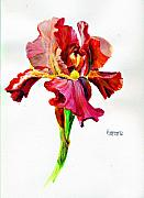 Fushia Painting Framed Prints - Iris Framed Print by Jimmie Trotter
