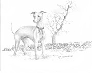 Speedy Originals - Italian Greyhound by Jim Hubbard