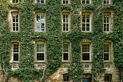League Metal Prints - Ivy League Metal Print by John Greim