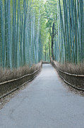Bamboo Fence Prints - Japan Kyoto Arashiyama Sagano Bamboo Print by Rob Tilley