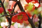 Tiny Leaves Prints - Japanese Quince Print by Yumi Johnson