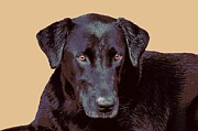 Labrador Retriever Puppy Digital Art - Jazz by Dorrie Pelzer