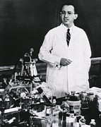 Scientists Art - Jonas E. Salk 1914-1995, American by Everett