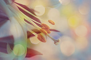 Macro Flower Prints - Joyfulness Print by Aimelle
