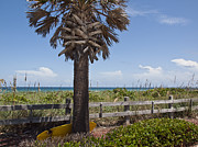 Blue Grapes Photos - Juan Ponce de Leon Landing Site in Florida by Allan  Hughes