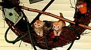 Kittens Pyrography - June 2005 by Robert Morin