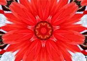 Kaleidoscope - Kaleidoscope of a Dahlia by Cathie Tyler