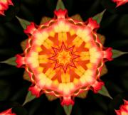 Kaleidoscope - Kaleidoscope of a Rosebud by Cathie Tyler