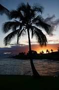 Surf Silhouette Posters - Kauai Hawaii Palm Tree Sunset Poster by ELITE IMAGE photography By Chad McDermott