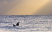 Paddle Originals - Kayak at Dawn by Mike  Dawson