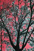 Carolyn Stagger Cokley - kimono pink