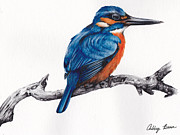 Kingfisher Originals - Kingfisher by Ashley Brown