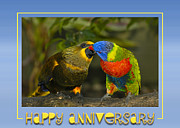 Lorikeet Photos - Kissing Birds by Carolyn Marshall