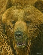 Kodiak Framed Prints - Kodiak Bear Framed Print by Larry Linton