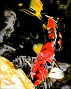 Bdmeredith Prints - Koi Print by Brian D Meredith