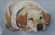 Dogs Drawings - Labradore  by Carla McKnight